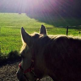 Sonne_Pferd
